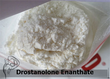 Injectiable Raw Steroid Powders Body Building Drostanolone Enanthate